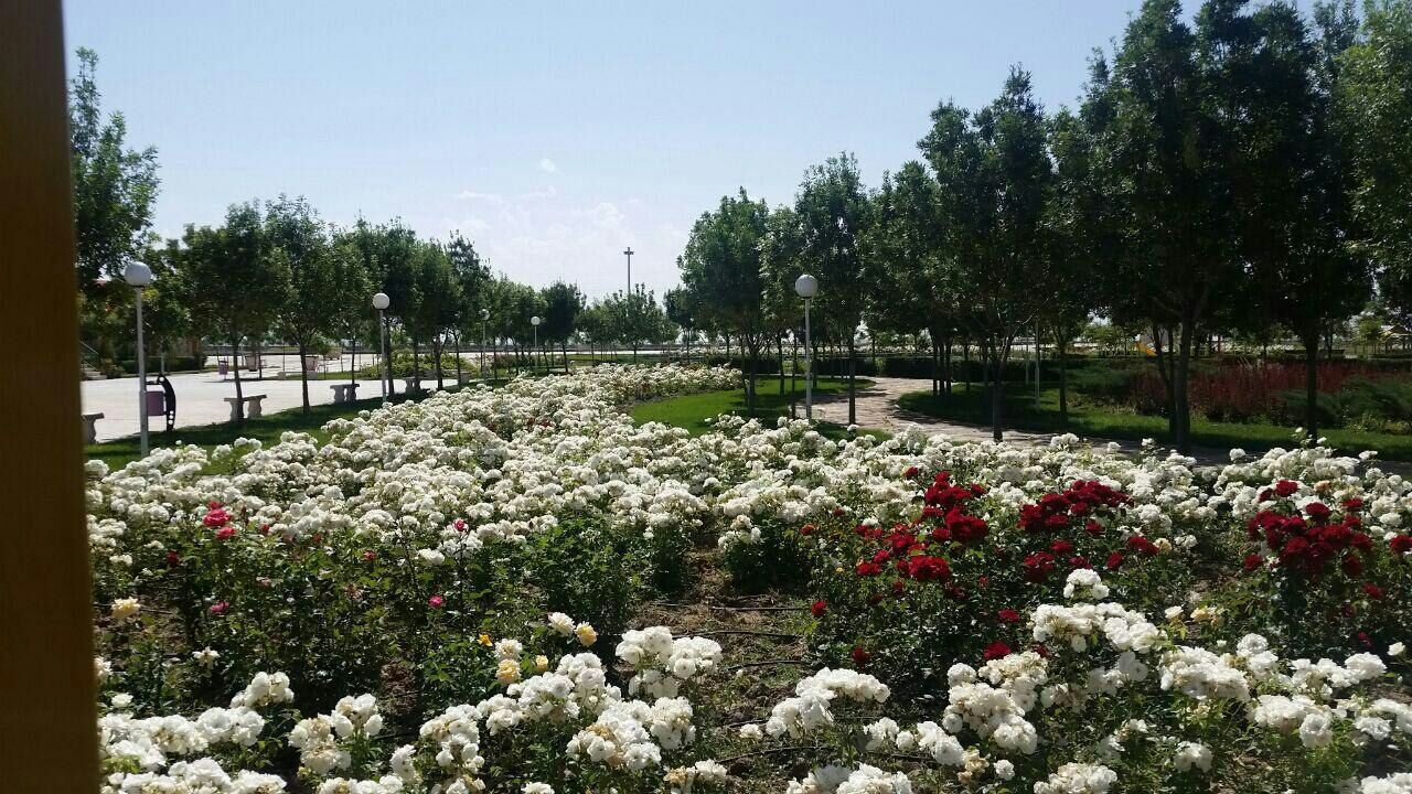 مجوعه زیبای باغ گل رز  مجتمع کوثر شهر فرمهین