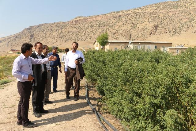 بازدید مهندس فراهانی و اعضای تخصصی مرکز به همراه تیم کانون استان ایلام از ایستگاه تحقیقاتی چنداول