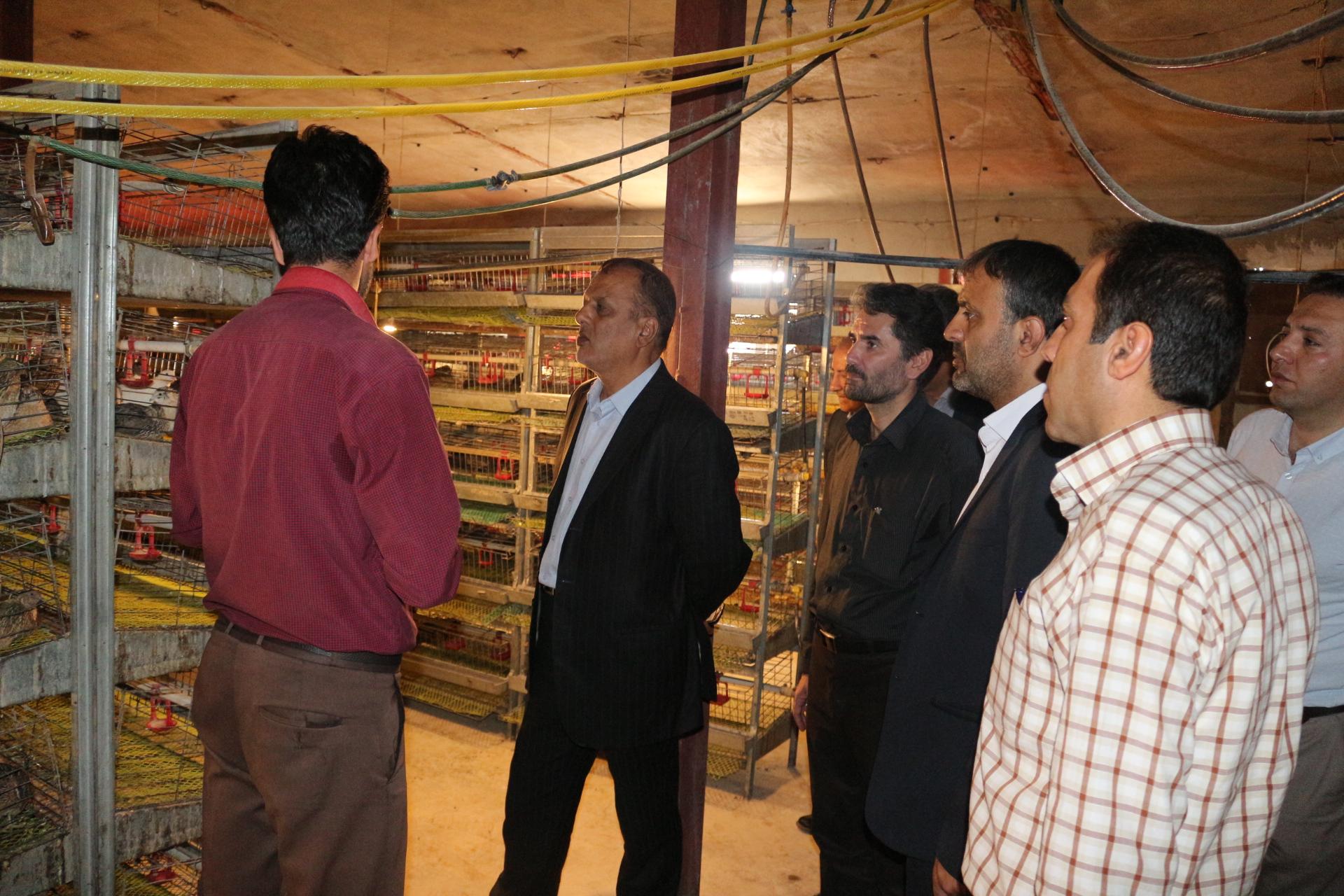 بازدید مهندس فراهانی و اعضای تخصصی مرکز به همراه تیم کانون استان کردستان از کارگاه صنعتی پرورش بلدرچین